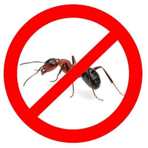 Выведение муравьев